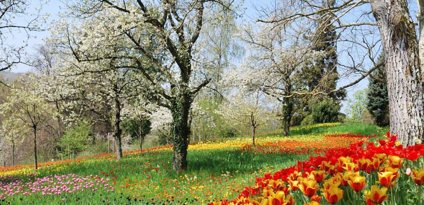 Frühlingszeit im Hörnli